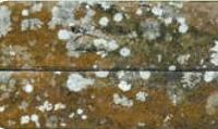 Madeiras com Fungos (pouco degradadas-atacadas)